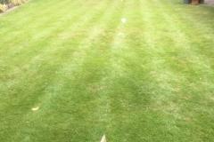 Lawn spray preparation