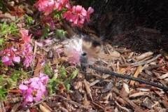 Micro-shrubler